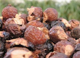 Sopa nuts